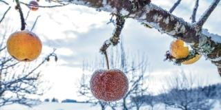 trattamenti invernali frutteto