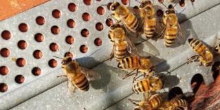 sostenibilità api