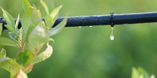 Impianto d'irrigazione: come impostare e gestire il suo funzionamento