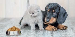 intolleranze alimentari cane e gatto