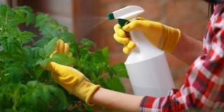 spray sapone di marsiglia per piante