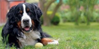 Progettare un giardino per il cane