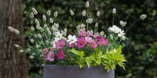 La fioriera elegante con fiori rosa e graminacee