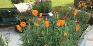 Invasioni Botaniche a Cremona