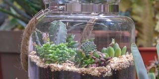 Fare un terrarium di piante grasse