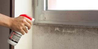 Z10 Saratoga applicato a spray