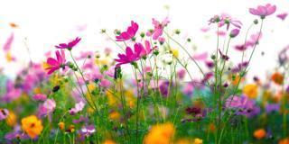 Se l'erba non cresce, ecco le alternative