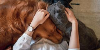 Animale e uomo: un legame sempre benefico