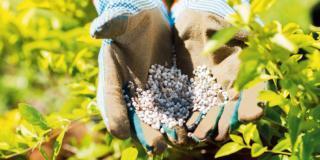 Le concimazioni autunnali per le piante
