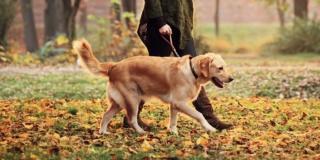 Cane: precauzioni contro il freddo